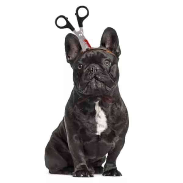 Halloween Dog Costume Scissors in Head