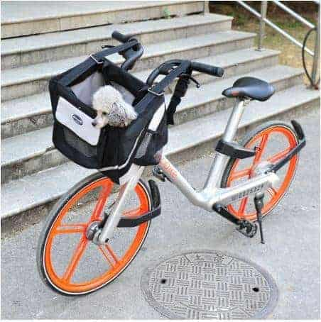 Bicycle Dog Carrier in Black