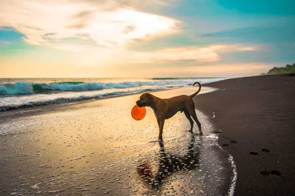 Find that special doggy toys