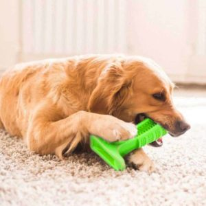 Dog Toothbrush Toy Green in use